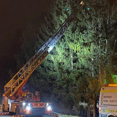 Zu sehen ist die Drehleiter der Feuerwehr Stockach bei dem Einsatz Katze auf Baum. Foto: FFW Stockach